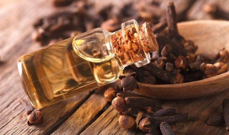 Tinh dầu trong đinh hương có khả năng cải thiện mùi hôi và kháng khuẩn tốt