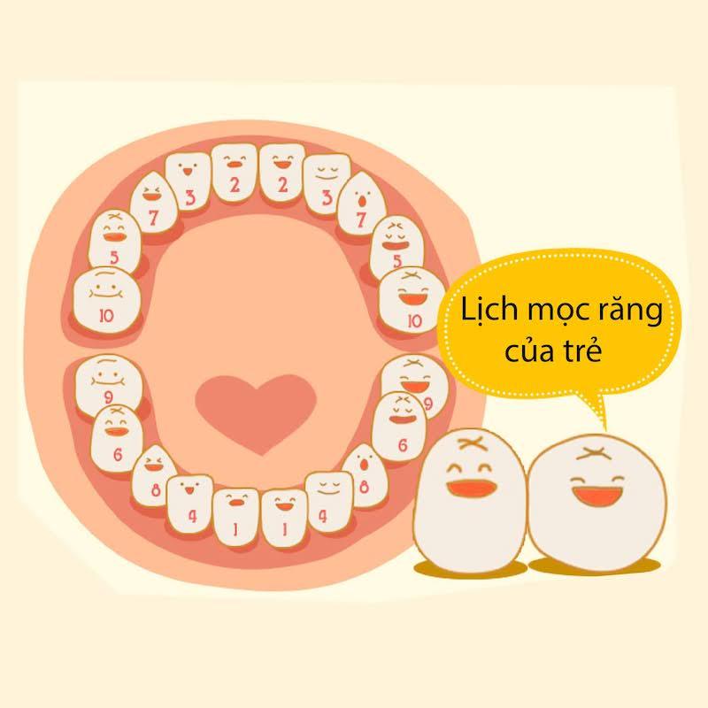 Lịch mọc răng sữa của trẻ nhỏ dưới 1 tuổi