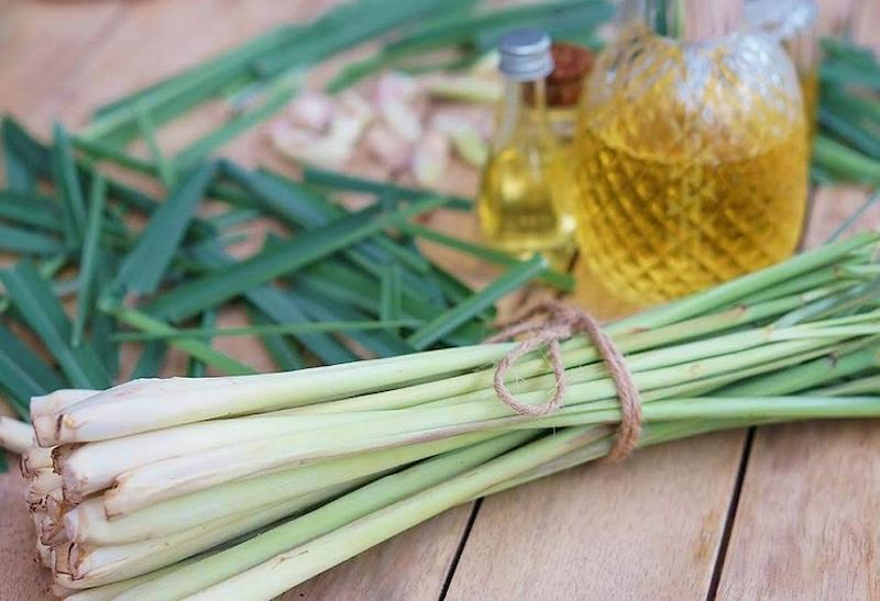 Sử dụng tinh dầu sả giúp giảm triệu chứng sưng viêm hiệu quả