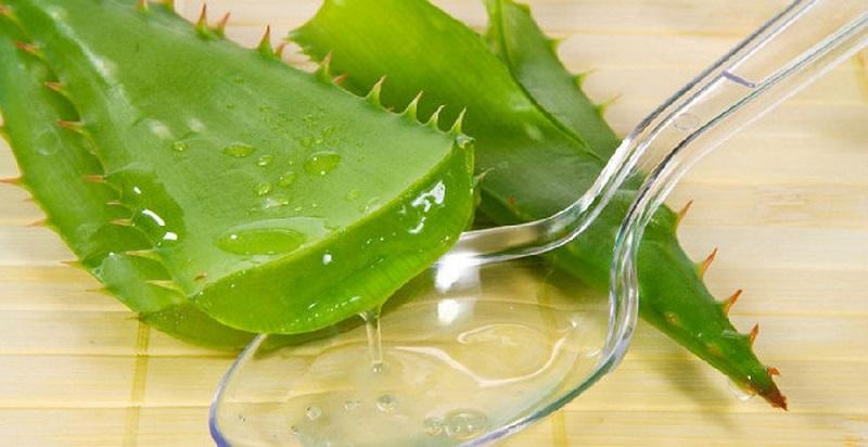 Phần gel trong suốt của lá lô hội có tính sát khuẩn kháng viêm tốt