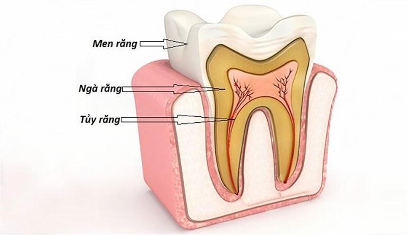 Cấu tạo 3 lớp của răng khểnh